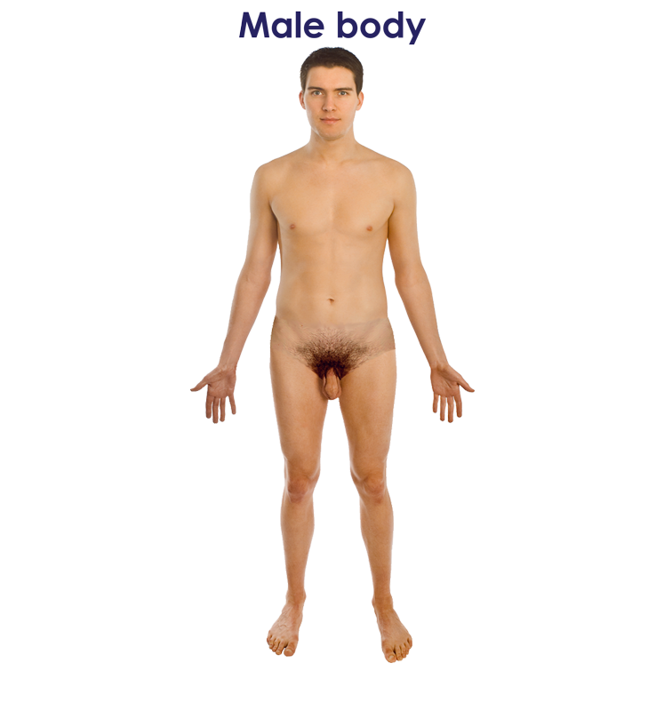 Naked_human_male-747-PXW.png